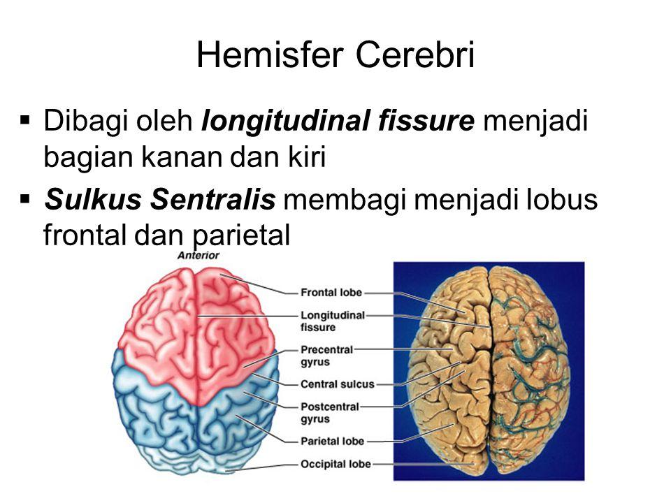 Hemisfer Cerebri Dibagi oleh longitudinal fissure menjadi bagian kanan dan kiri.