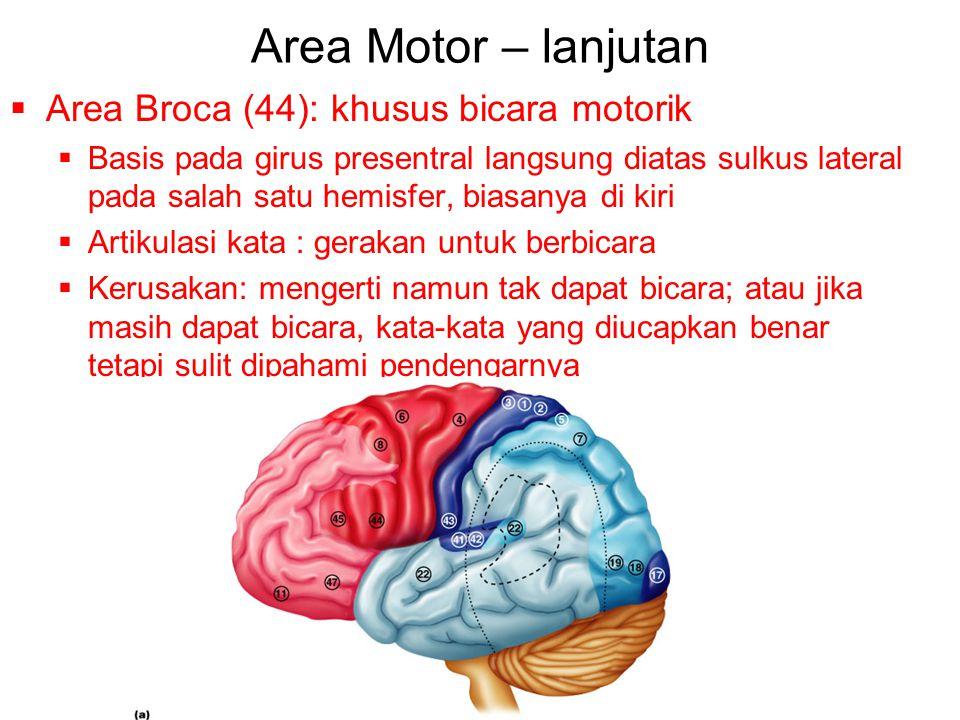 Area Motor – lanjutan Area Broca (44): khusus bicara motorik