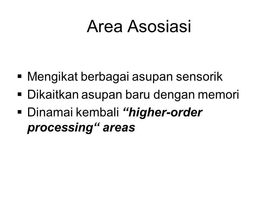 Area Asosiasi Mengikat berbagai asupan sensorik