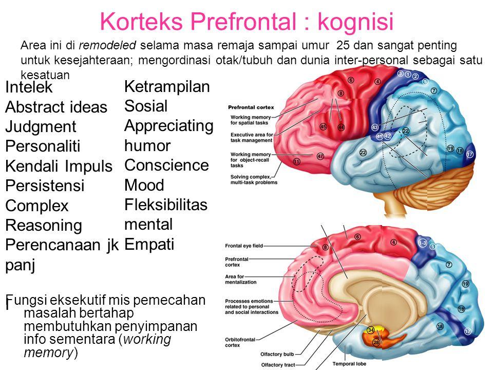 Korteks Prefrontal : kognisi
