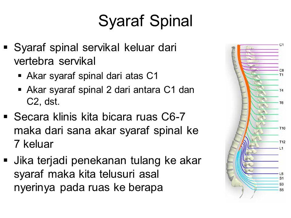 Syaraf Spinal Syaraf spinal servikal keluar dari vertebra servikal