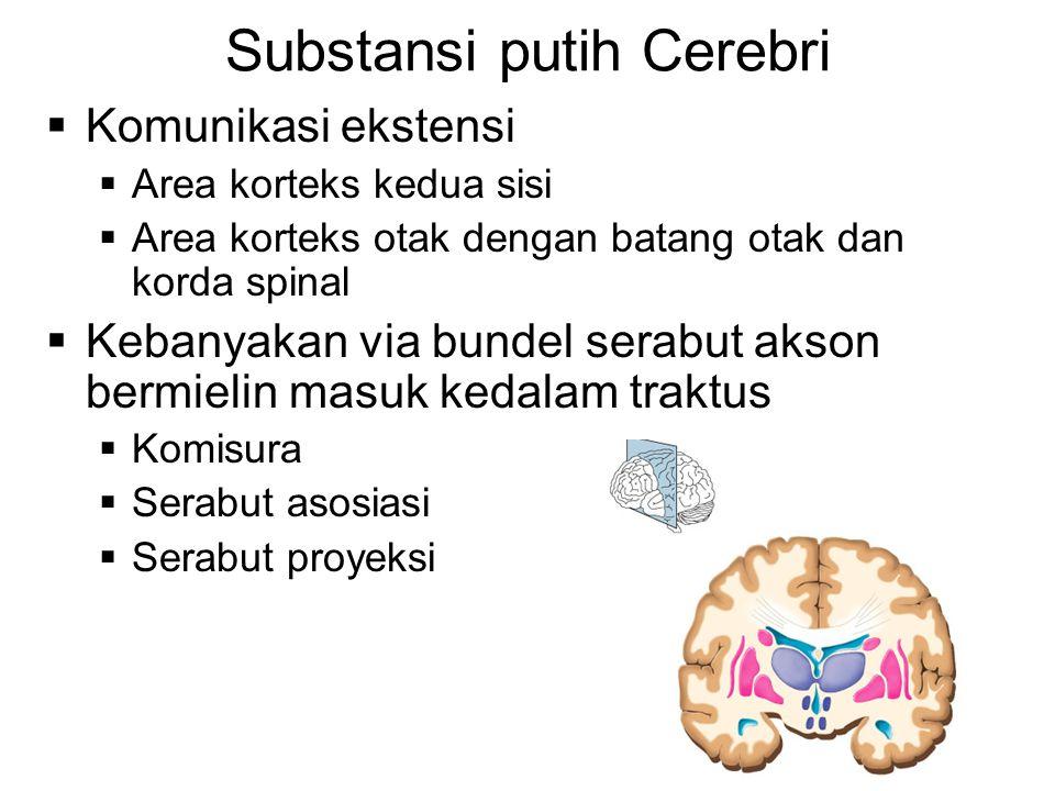 Substansi putih Cerebri