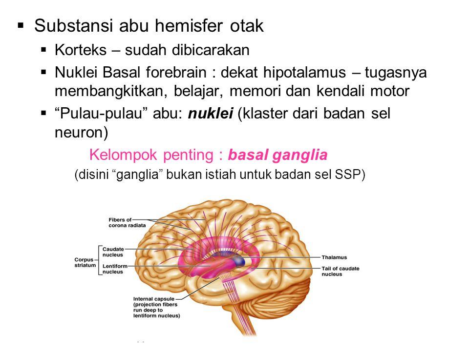 Substansi abu hemisfer otak