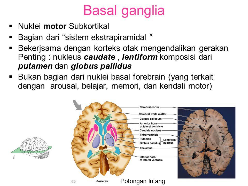 Basal ganglia Nuklei motor Subkortikal