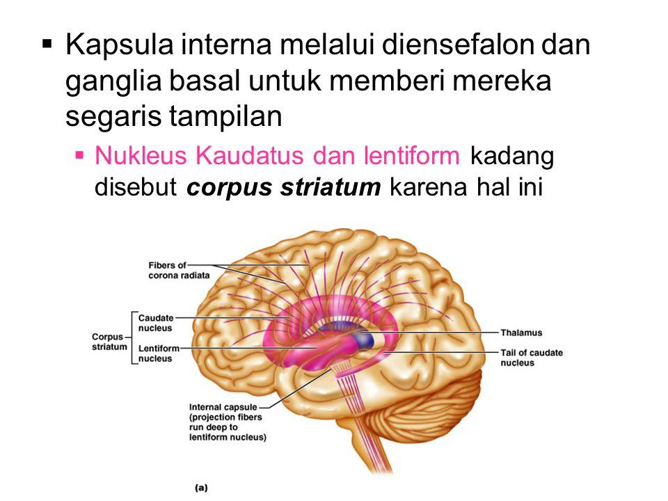 Kapsula interna melalui diensefalon dan ganglia basal untuk memberi mereka segaris tampilan
