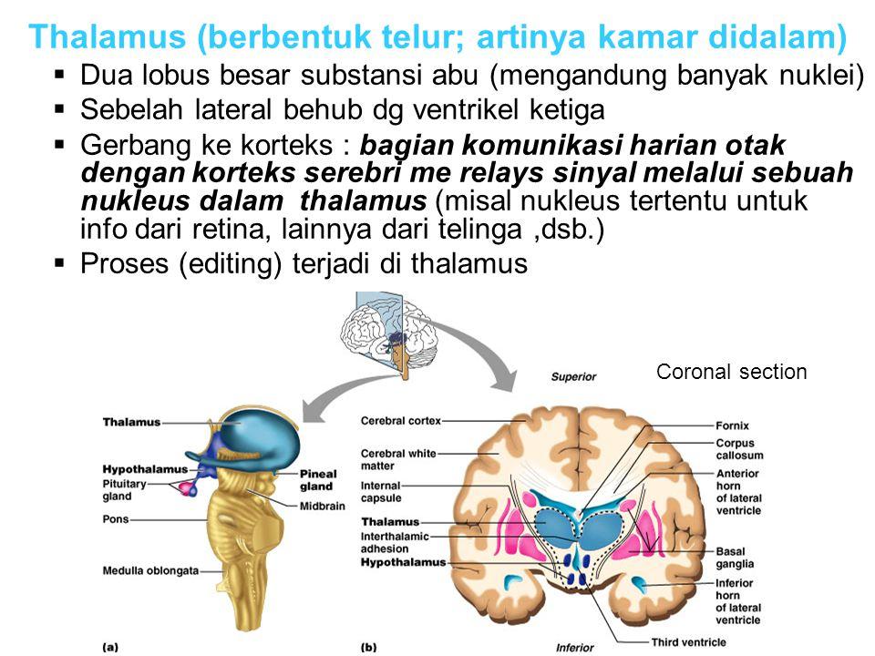 Thalamus (berbentuk telur; artinya kamar didalam)