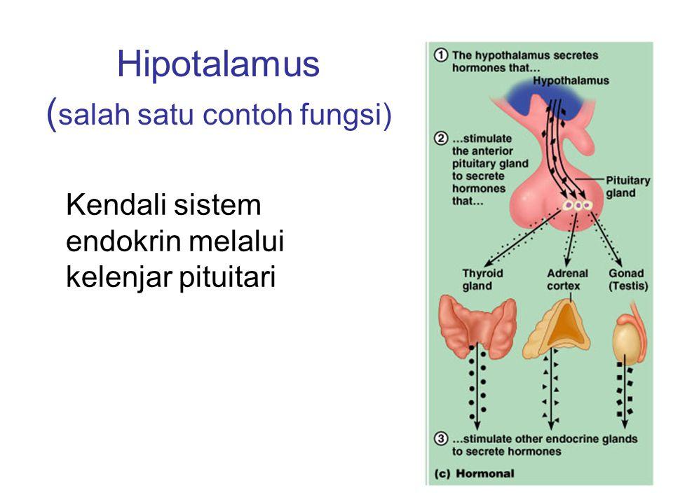 Hipotalamus (salah satu contoh fungsi)
