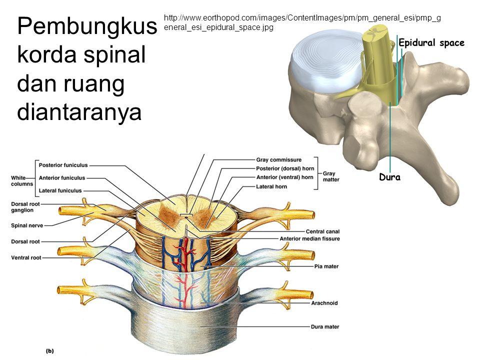 Pembungkus korda spinal dan ruang diantaranya