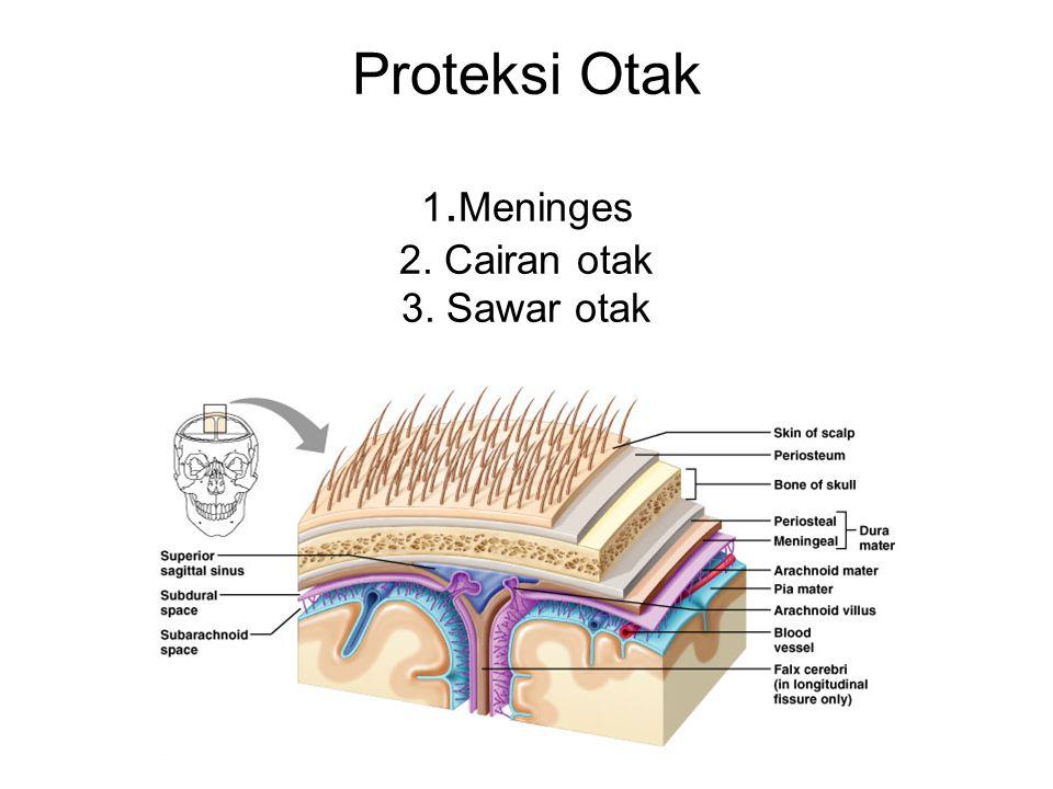 Proteksi Otak 1.Meninges 2. Cairan otak 3. Sawar otak