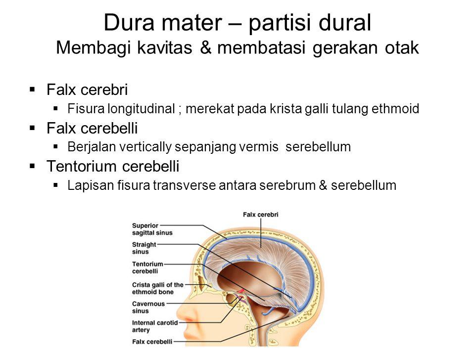 Dura mater – partisi dural Membagi kavitas & membatasi gerakan otak