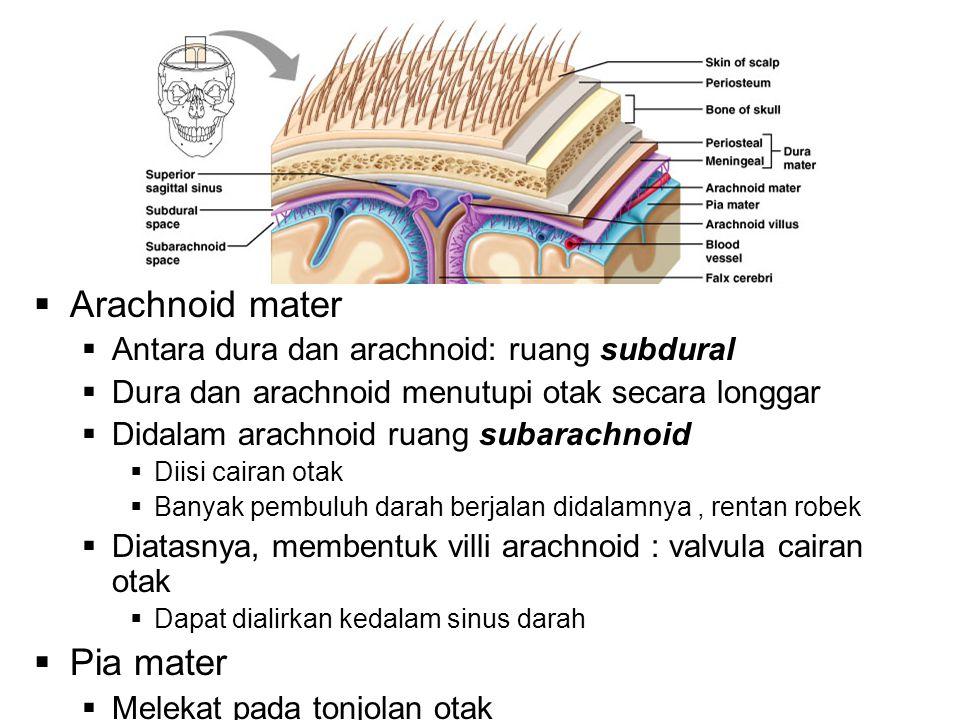 Arachnoid mater Pia mater Antara dura dan arachnoid: ruang subdural