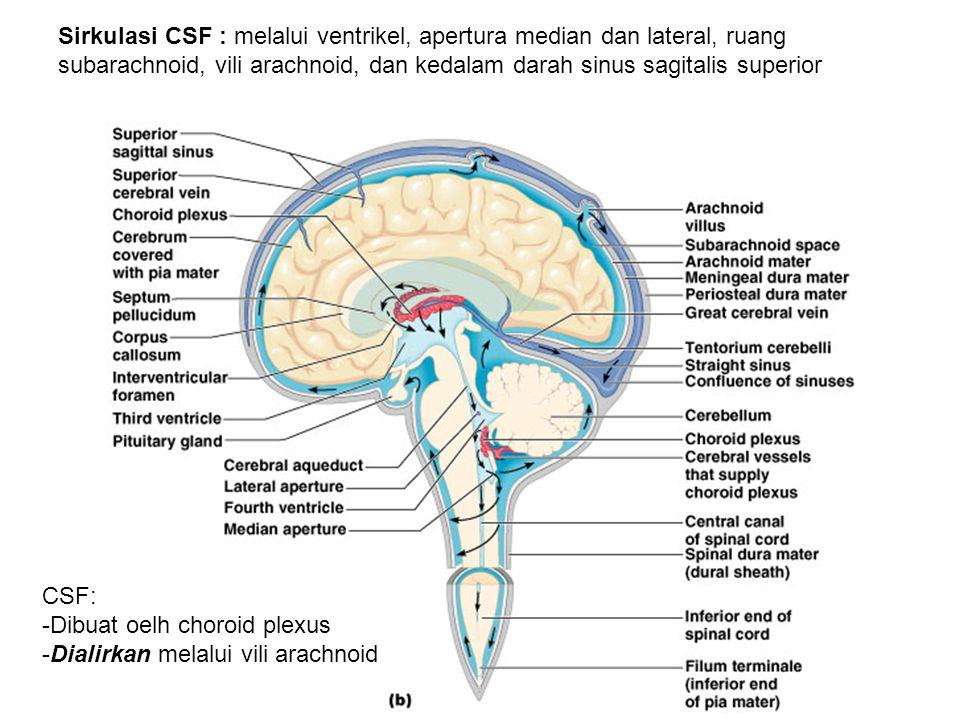 Sirkulasi CSF : melalui ventrikel, apertura median dan lateral, ruang subarachnoid, vili arachnoid, dan kedalam darah sinus sagitalis superior