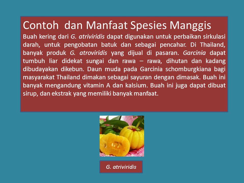 Contoh dan Manfaat Spesies Manggis