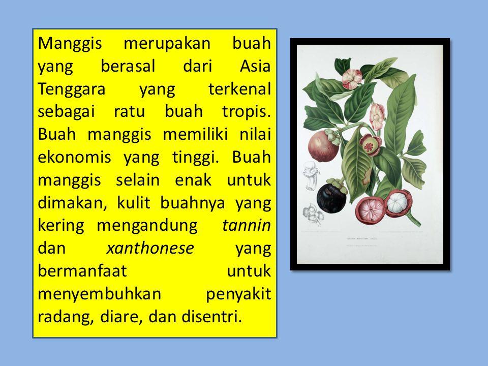 Manggis merupakan buah yang berasal dari Asia Tenggara yang terkenal sebagai ratu buah tropis.