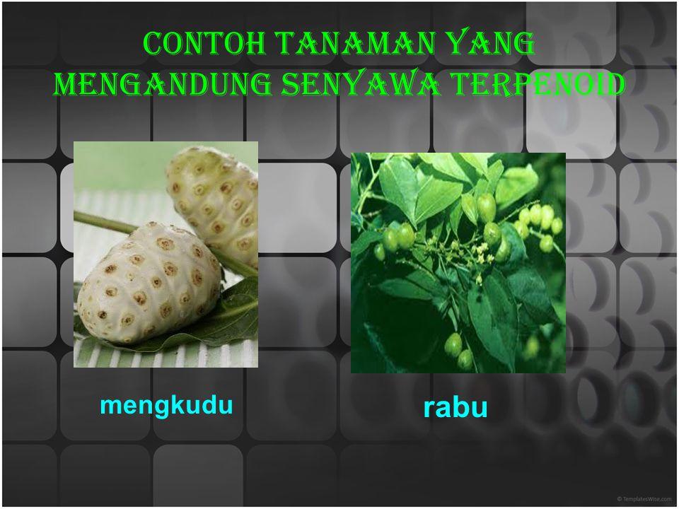 Contoh tanaman yang mengandung senyawa terpenoid