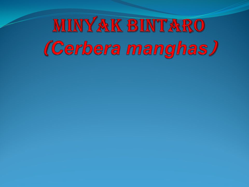 Minyak bintaro (Cerbera manghas)
