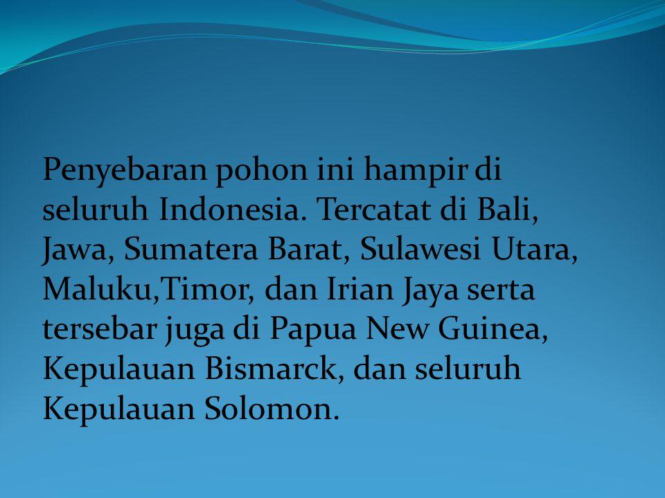 Penyebaran pohon ini hampir di seluruh Indonesia