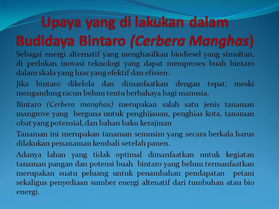 Upaya yang di lakukan dalam Budidaya Bintaro (Cerbera Manghas)