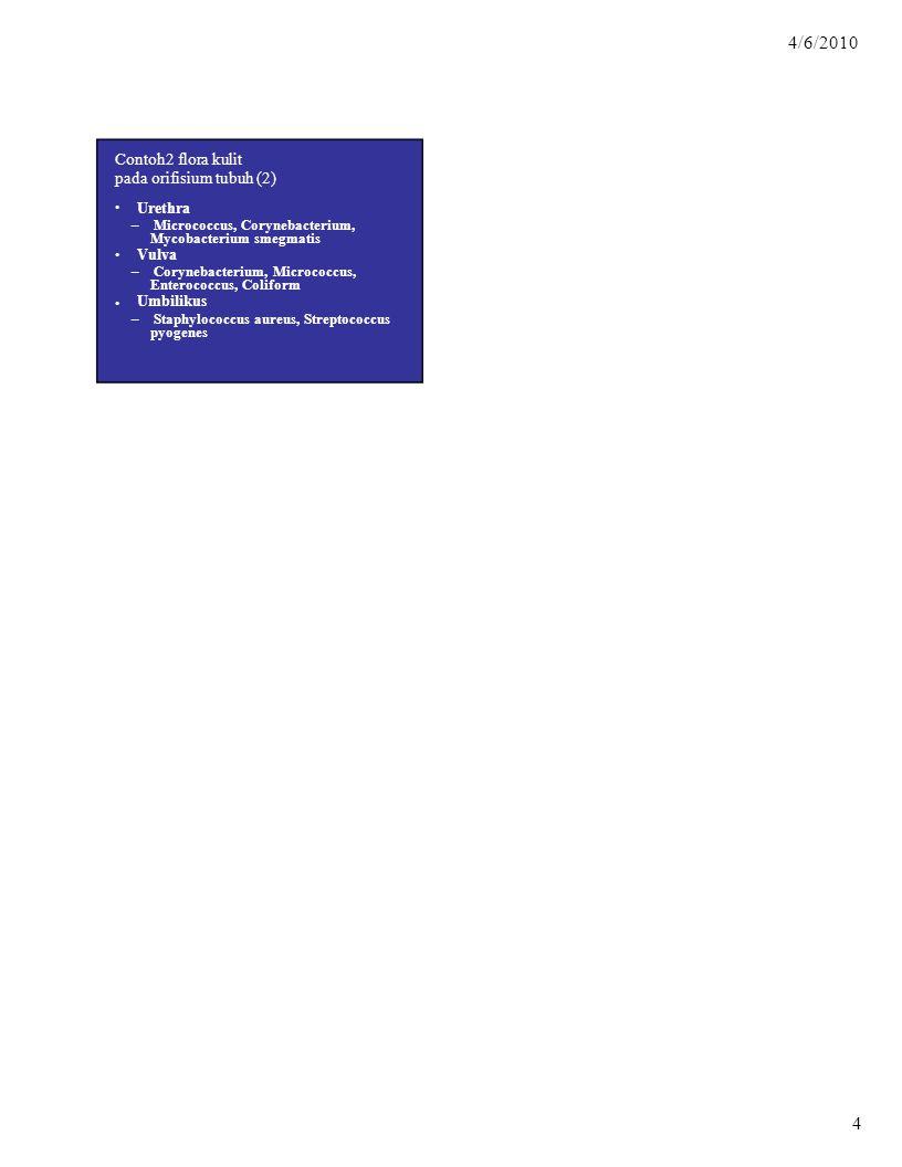 Mycobacterium smegmatis Vulva Enterococcus, Coliform Umbilikus