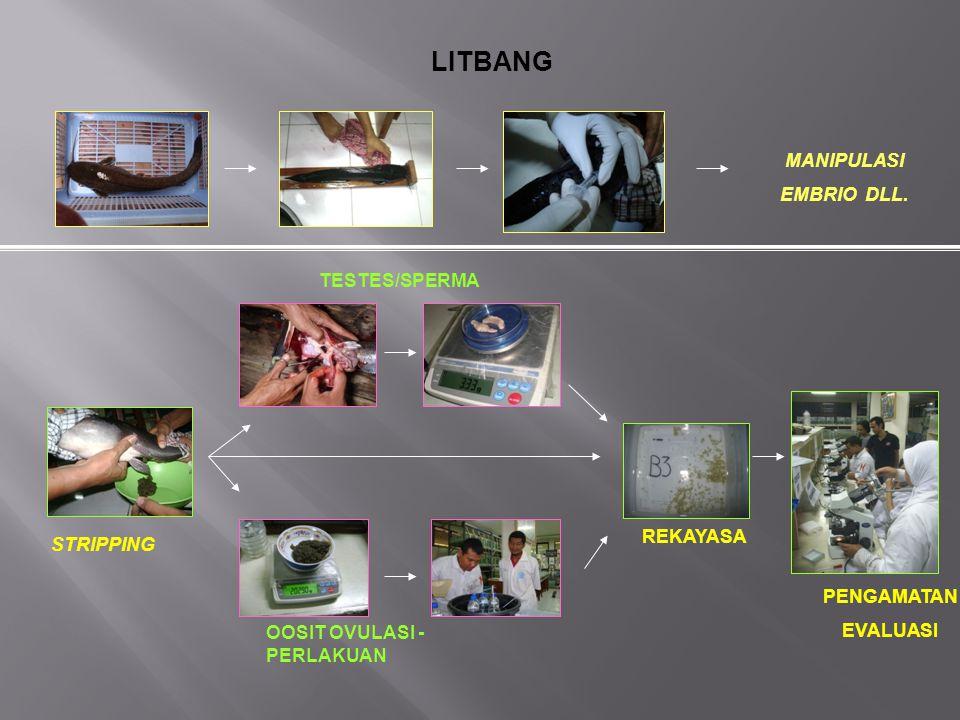 LITBANG MANIPULASI EMBRIO DLL. TESTES/SPERMA REKAYASA STRIPPING
