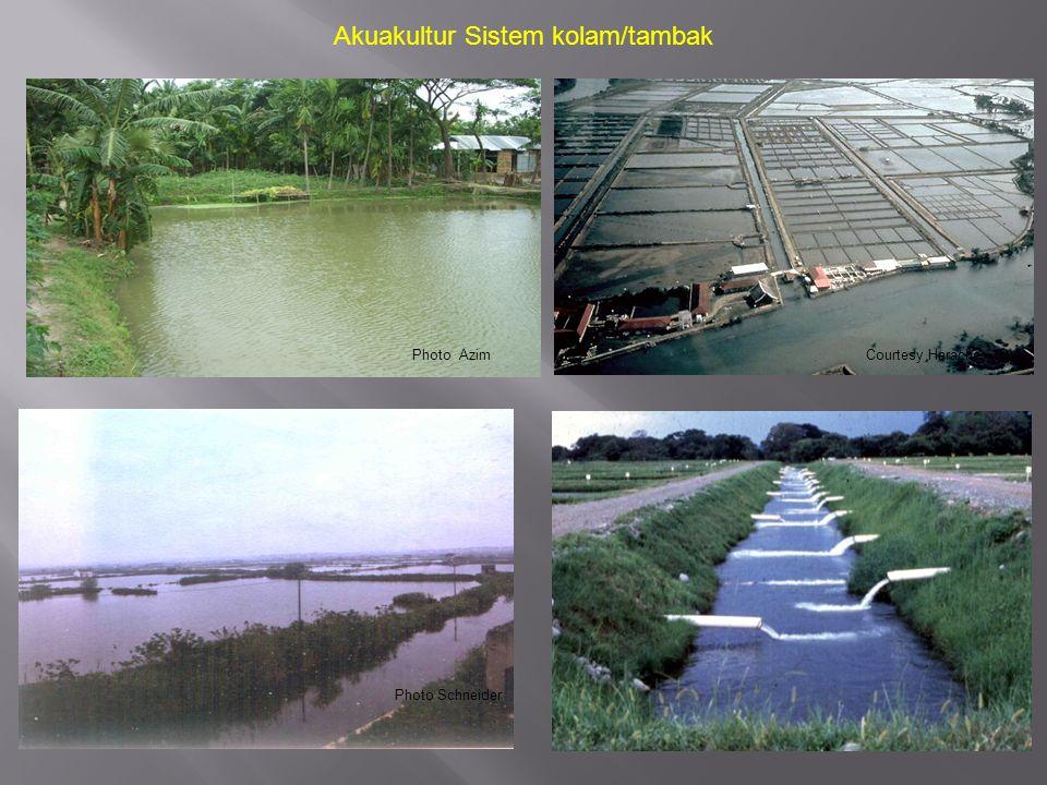 Akuakultur Sistem kolam/tambak