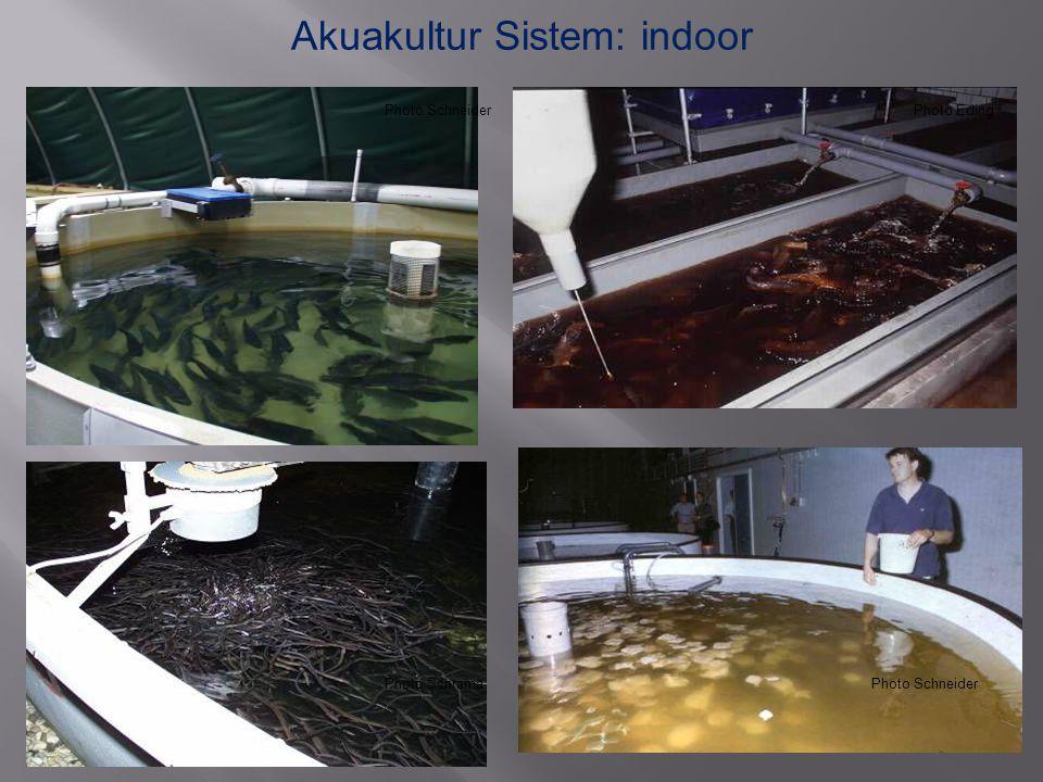 Akuakultur Sistem: indoor