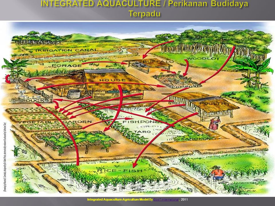 INTEGRATED AQUACULTURE / Perikanan Budidaya Terpadu