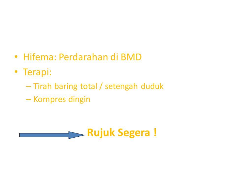 Rujuk Segera ! Hifema: Perdarahan di BMD Terapi: