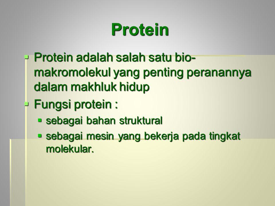 Protein Protein adalah salah satu bio-makromolekul yang penting peranannya dalam makhluk hidup. Fungsi protein :