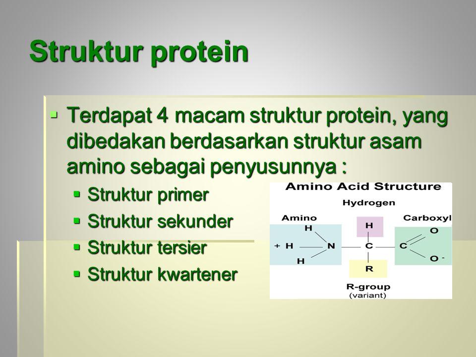 Struktur protein Terdapat 4 macam struktur protein, yang dibedakan berdasarkan struktur asam amino sebagai penyusunnya :