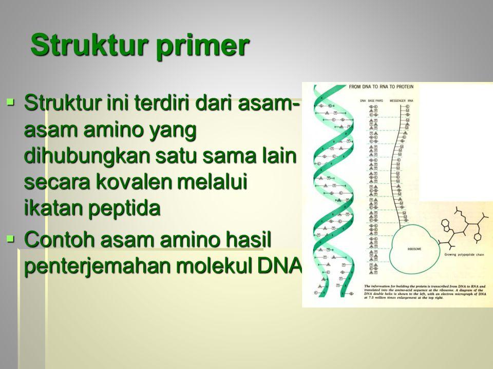 Struktur primer Struktur ini terdiri dari asam-asam amino yang dihubungkan satu sama lain secara kovalen melalui ikatan peptida.