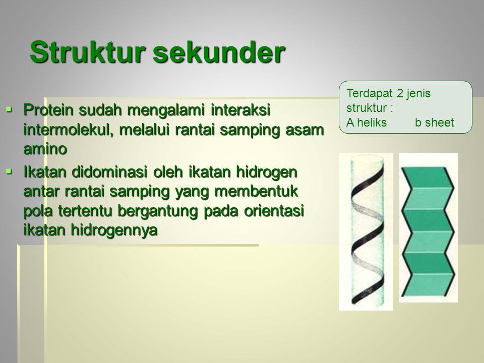 Struktur sekunder Terdapat 2 jenis struktur : A heliks b sheet.