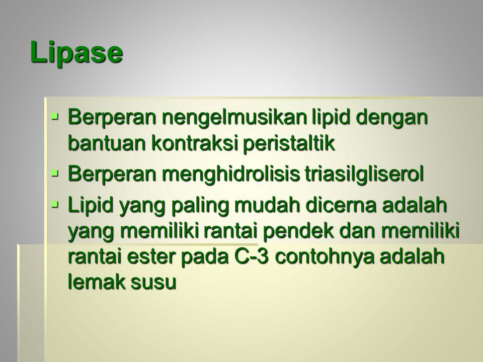 Lipase Berperan nengelmusikan lipid dengan bantuan kontraksi peristaltik. Berperan menghidrolisis triasilgliserol.