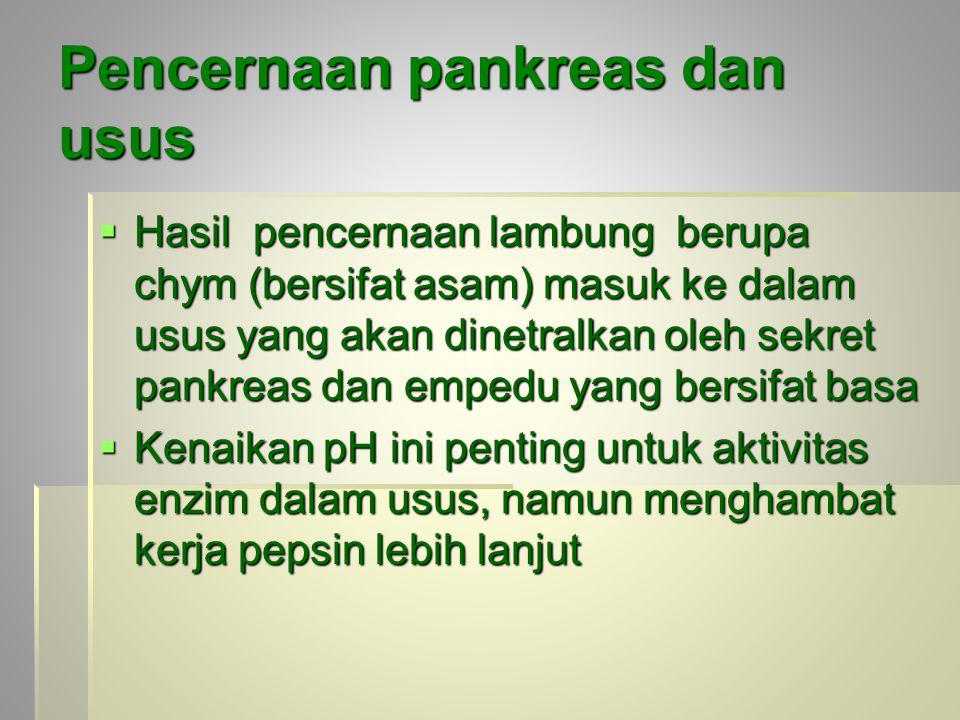 Pencernaan pankreas dan usus