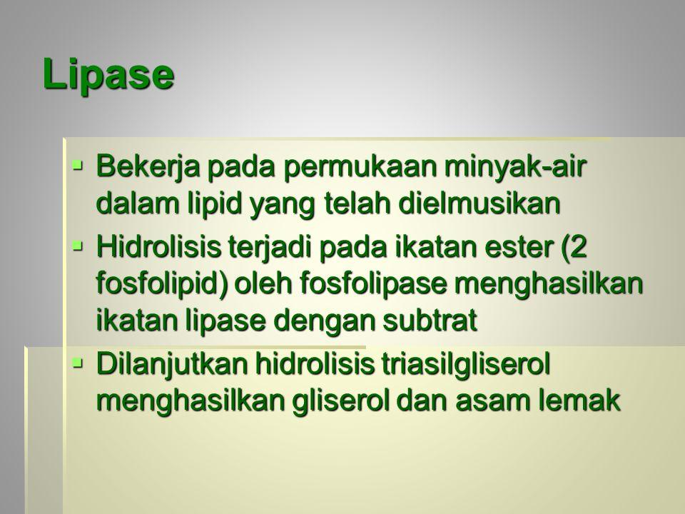 Lipase Bekerja pada permukaan minyak-air dalam lipid yang telah dielmusikan.
