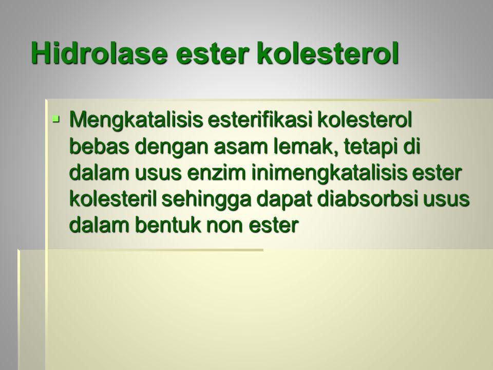 Hidrolase ester kolesterol