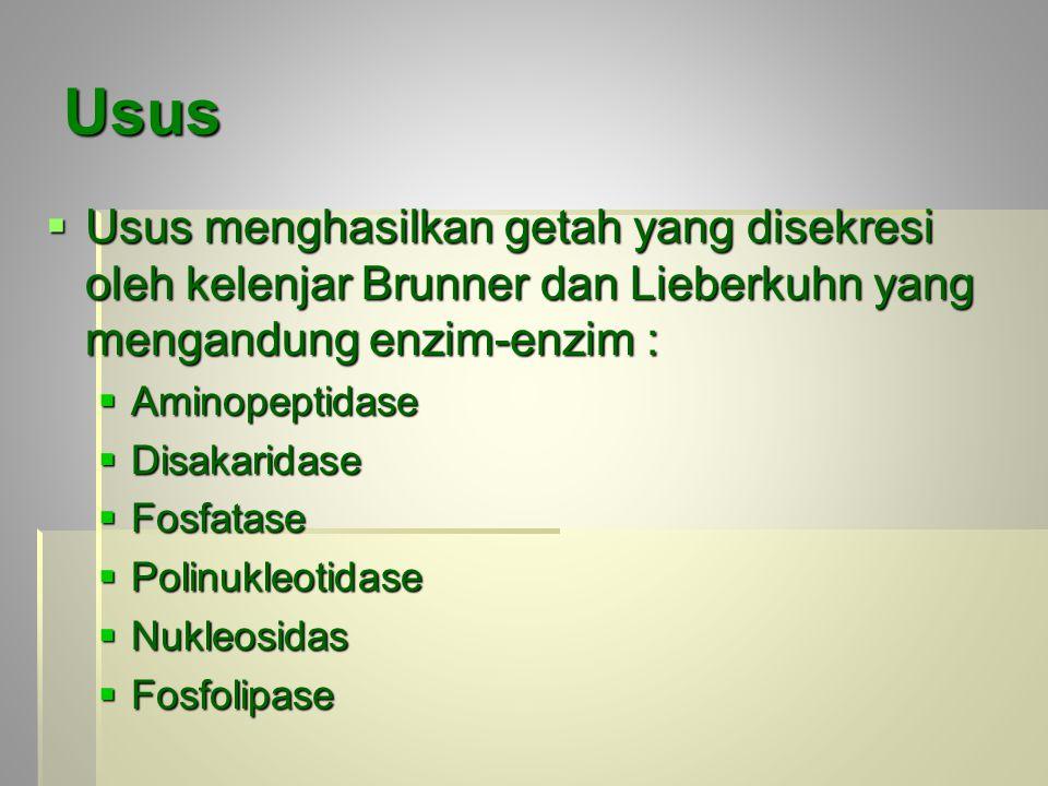 Usus Usus menghasilkan getah yang disekresi oleh kelenjar Brunner dan Lieberkuhn yang mengandung enzim-enzim :
