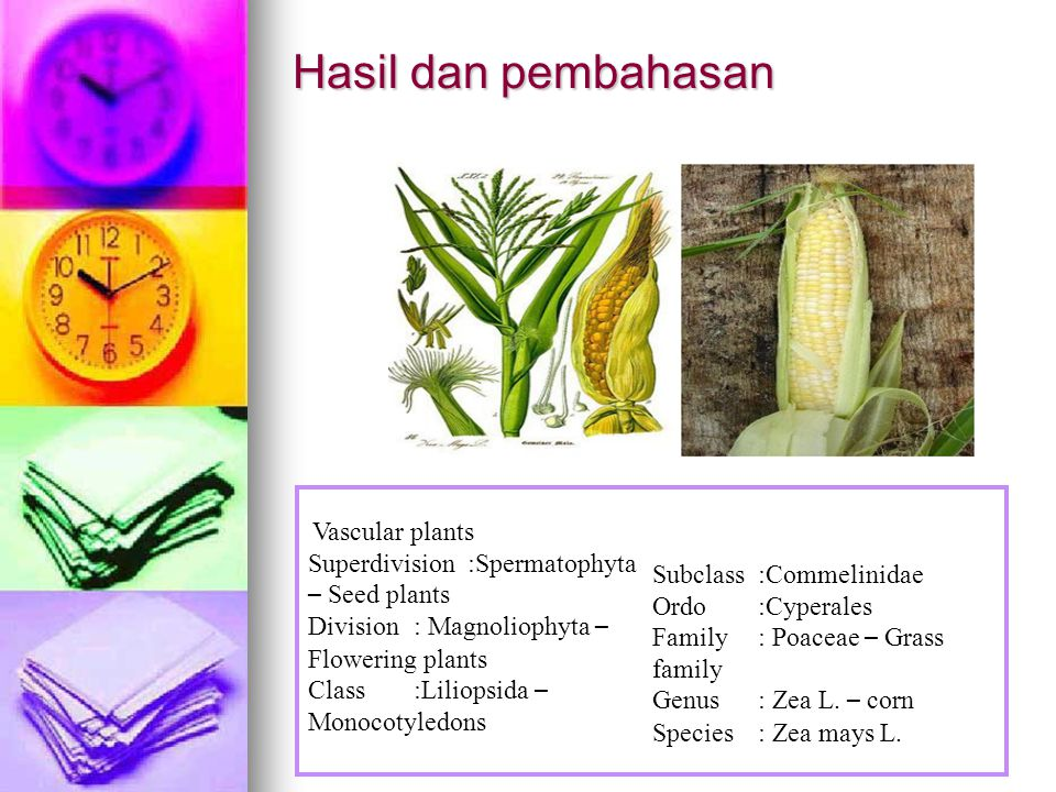 Hasil dan pembahasan Superdivision :Spermatophyta – Seed plants