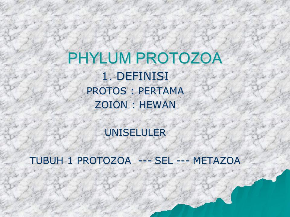 TUBUH 1 PROTOZOA --- SEL --- METAZOA