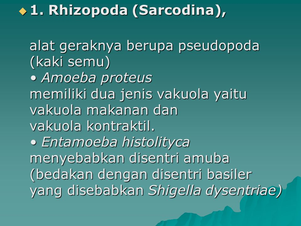 1. Rhizopoda (Sarcodina),