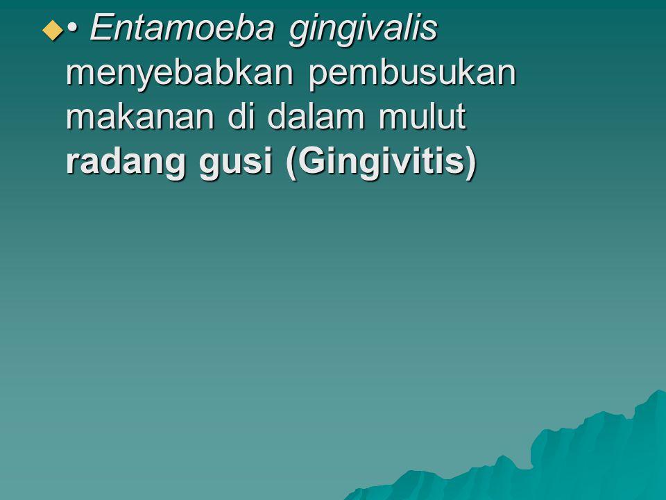 • Entamoeba gingivalis menyebabkan pembusukan makanan di dalam mulut radang gusi (Gingivitis)