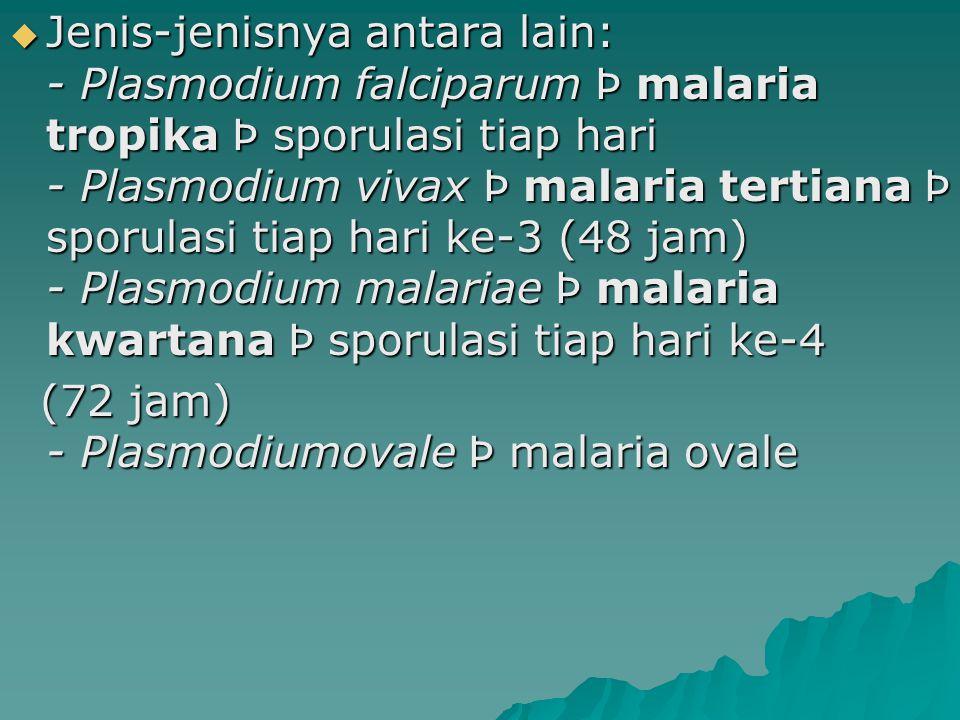 Jenis-jenisnya antara lain: - Plasmodium falciparum Þ malaria tropika Þ sporulasi tiap hari - Plasmodium vivax Þ malaria tertiana Þ sporulasi tiap hari ke-3 (48 jam) - Plasmodium malariae Þ malaria kwartana Þ sporulasi tiap hari ke-4