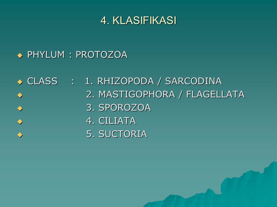 4. KLASIFIKASI PHYLUM : PROTOZOA CLASS : 1. RHIZOPODA / SARCODINA