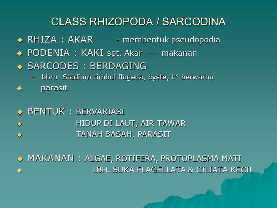 CLASS RHIZOPODA / SARCODINA