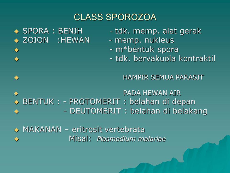 CLASS SPOROZOA SPORA : BENIH - tdk. memp. alat gerak