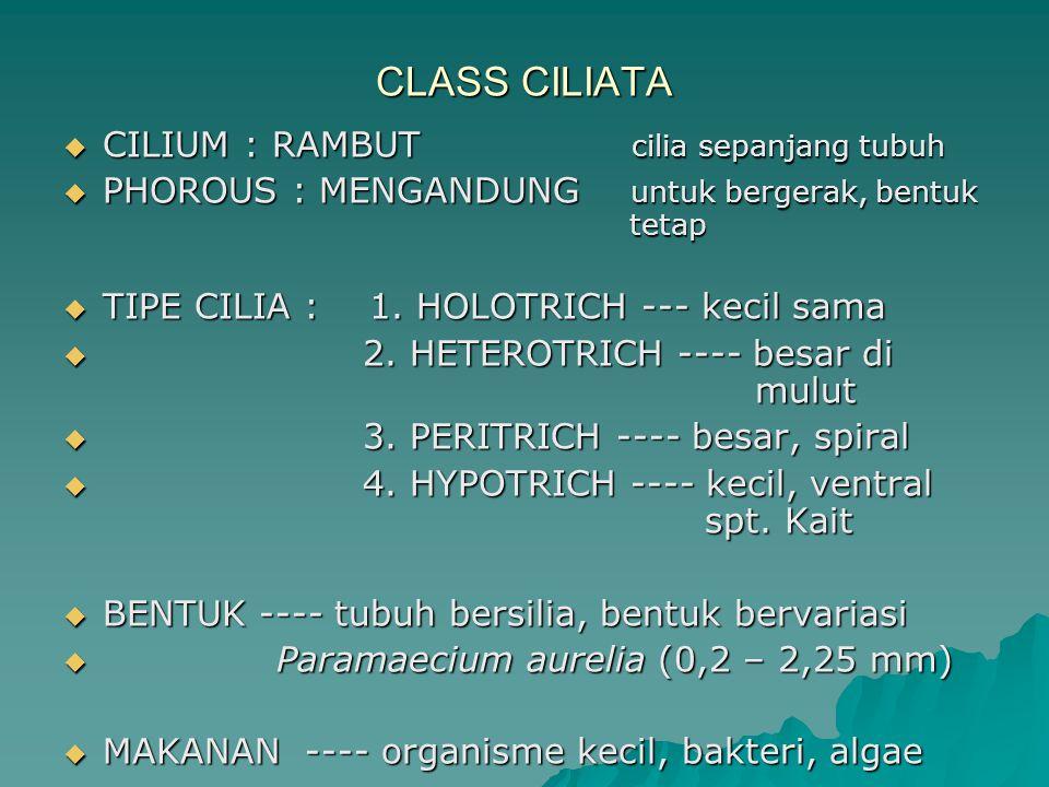 CLASS CILIATA CILIUM : RAMBUT cilia sepanjang tubuh