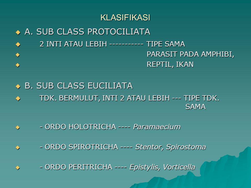 A. SUB CLASS PROTOCILIATA 2 INTI ATAU LEBIH ----------- TIPE SAMA