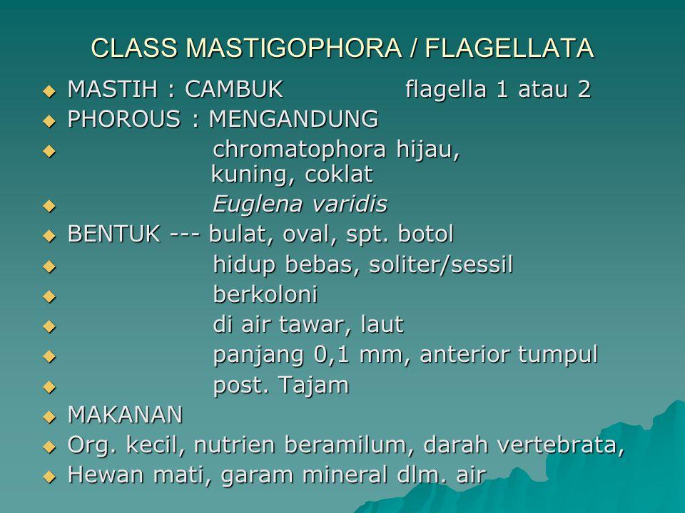 CLASS MASTIGOPHORA / FLAGELLATA