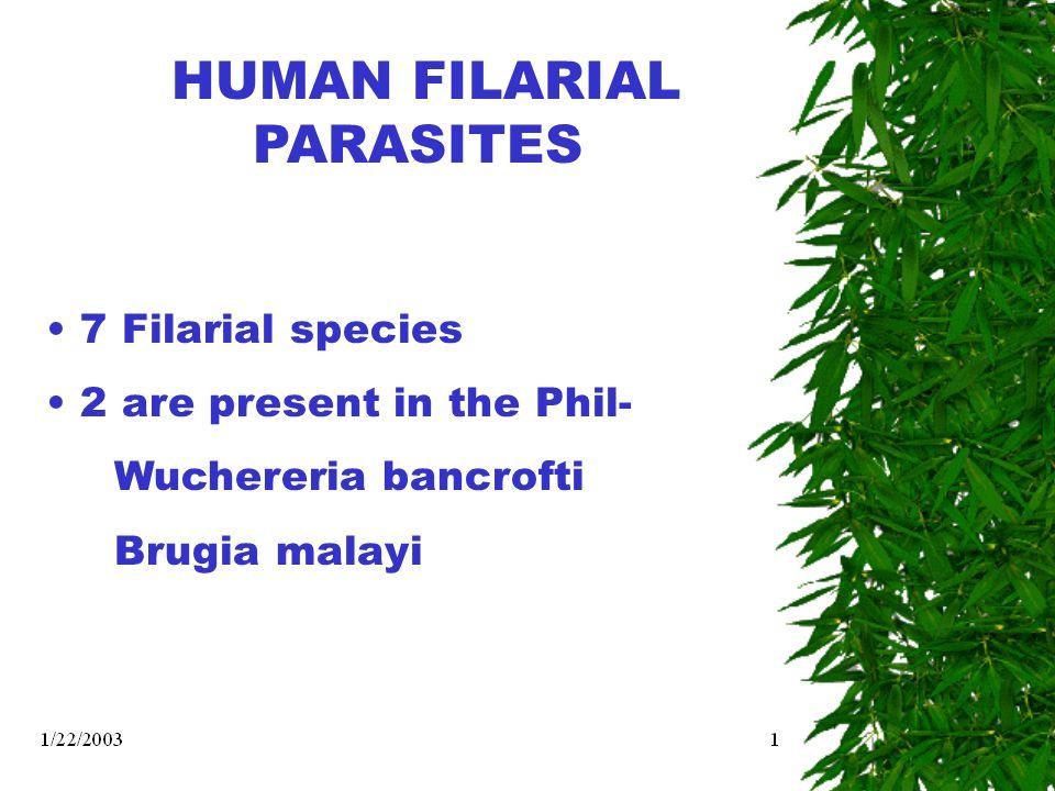 HUMAN FILARIAL PARASITES