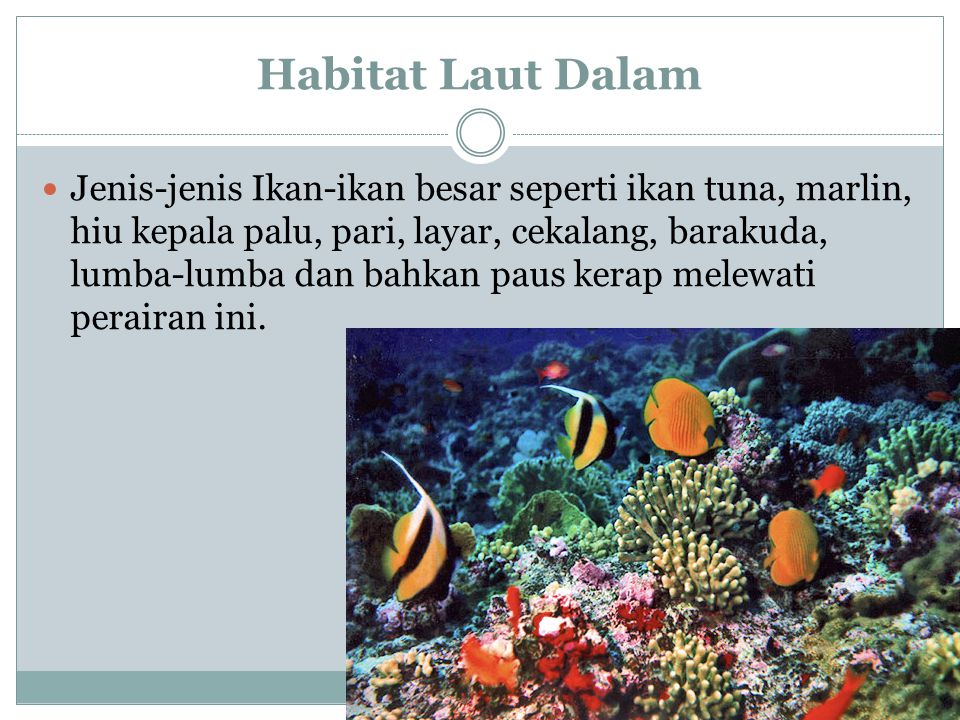 Habitat Laut Dalam
